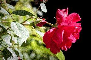 Fresh new roses (impressionist)