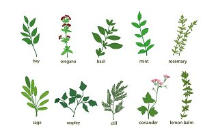 Herbs and Spices Vector Set