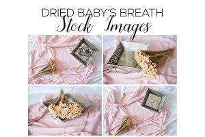Dried Baby's Breath Stock Images