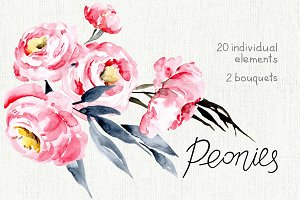 Watercolor pink peonies