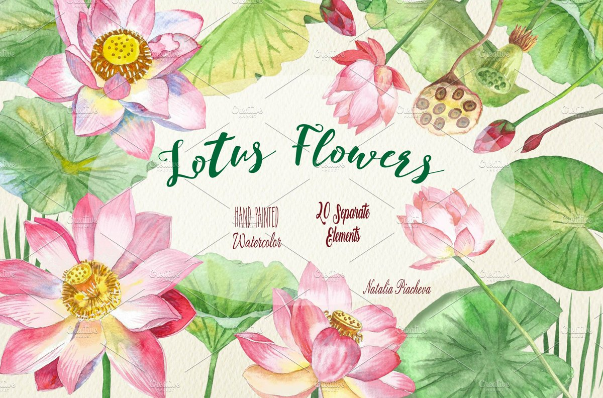 Lotus Flowers Illustrations Creative Market