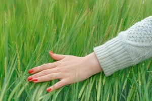 the hand on the background field of wheat