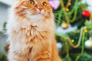 Cute ginger cat and Christmas tree