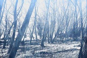Trees @ Delta