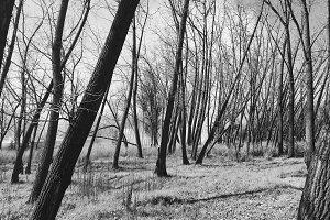 Trees @ Park