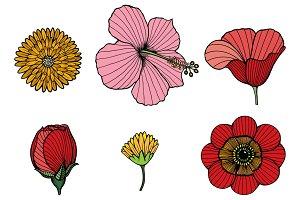 12-Vector Flowers