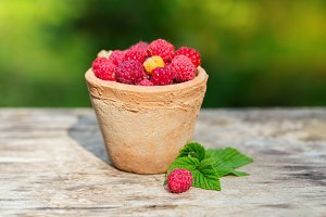 Raspberries in garden