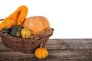 Pumpkin crop autumn