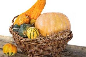 Autumn pumpkin crop