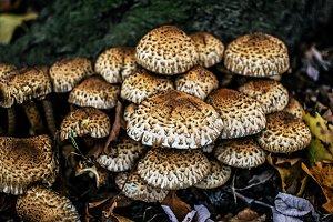 Mushroom Colonies 2.