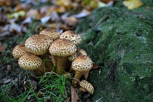Mushroom Colonies 3.