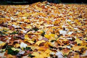 Leaf Carpet 2.