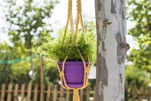 Flower in a pot hanged on tree