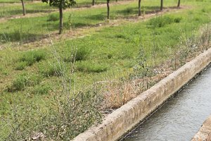 Irrigation canal and fruit trees