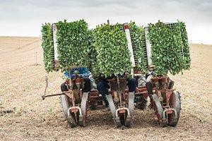 Planting seedlings machine