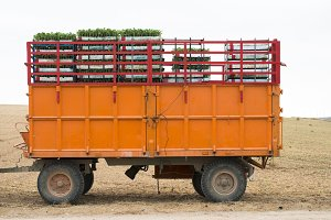 Tractor trailer and seedlings