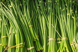 Organic garlic sprouts