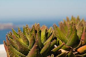 Cactus on Blue
