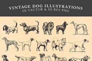 Vintage Dog Illustrations Vector