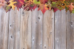 Lovely Autumn Leaf Border on wood