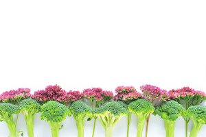 Broccoli and Flowers Border