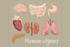 Different human organs set