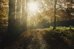 Sunlight in deciduous forest