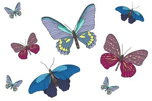 Graphic set with butterflies