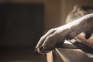A Dog's Paw in a Sun Beam