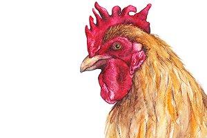 Watercolor bird cock rooster artwork