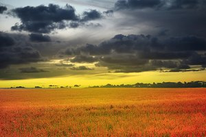 evening sunset sky and meadow