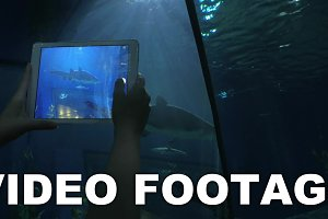 Taking pictures of shark by tablet