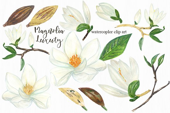 Magnolia white luxury clipart ~ Illustrations on Creative Market