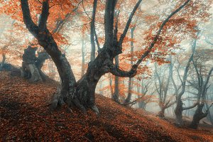 Mystical forest in fog