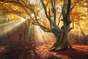 Sunny autumn forest in fog