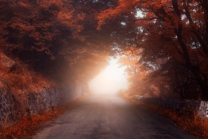 Road through autumn foggy forest