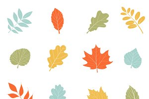 Vector autumn leaves.