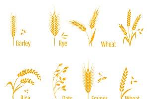 wheat, corn, oats, rye, barley