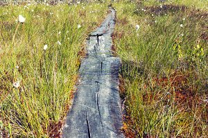 Wooden path walkway