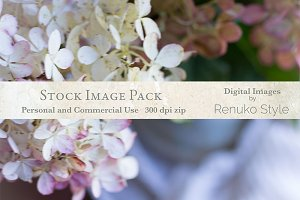 Floral Still Life Stock Image Pack
