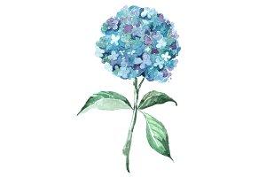 Blue Hydrangea Watercolor Clip Art