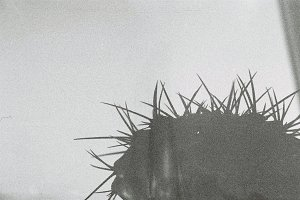 Spiny Cactus  Silhouette