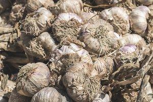 Braided dry garlic