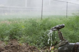 Agriculture pipes and tap water