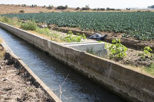 Irrigation of vegetables.