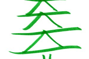 Christmas tree pine
