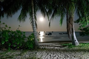 Beach at Night in the Moonlight