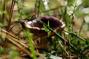 Mushroom among the grass