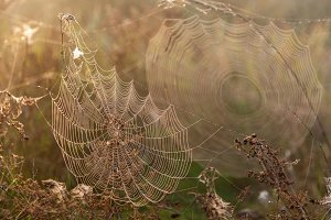 Two webs of the spider