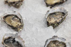 fleshly opened oysters